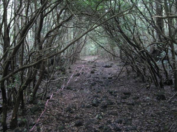 Pylli i vetevrasjeve! Aokigahara-forest-108